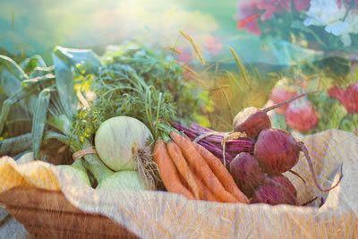 harvest wheat carrots beats