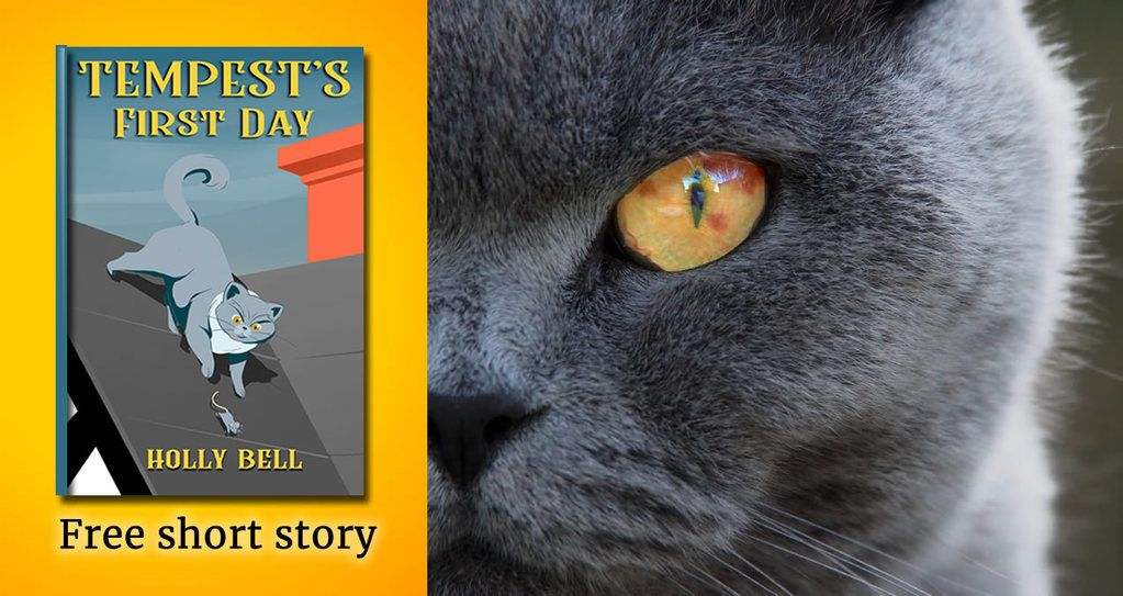 Text free short story, Tempest's first day and photo of half the face of grey cat