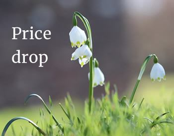 Snow drop with text: Price drop
