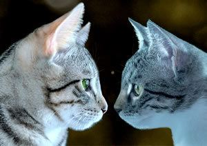 Two cats nose to nose - the writers dilemma