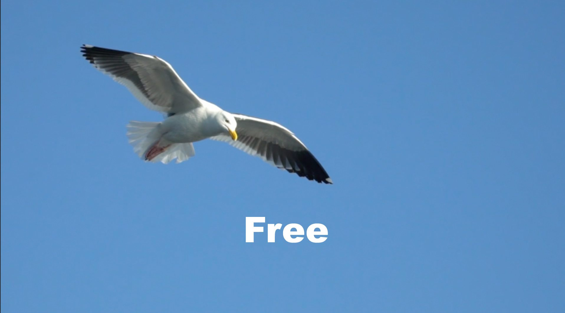 Bird in blue sky with text in white: Free. Link image to video for free days for Amanda Cadabra Book 1